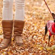 Young woman walking with her miniature pincher puppy in autumn forest wearing winter sweater. — Stock Photo #57580529