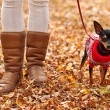 Young woman walking with her miniature pincher puppy in autumn forest wearing winter sweater. — Stock Photo #57580533