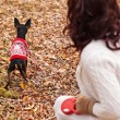 Young woman walking with her miniature pincher puppy in autumn forest wearing winter sweater. — Stock Photo #57580543