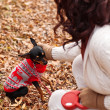 Young woman walking with her miniature pincher puppy in autumn forest wearing winter sweater. — Stock Photo #57580555