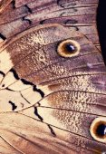 Macro close up of   Butterfly Wing — Stock Photo