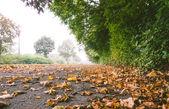 Folhas de outono em um asfalto — Fotografia Stock