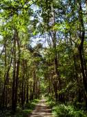 Road through green forest — Stock Photo