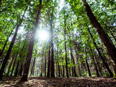 Picturesque forest illuminated by the sun — Foto de Stock