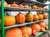 Pumpkins different shapes and sizes in the street market — Стоковое фото
