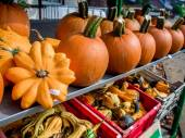 Pumpkins different shapes and sizes in the street market — Stockfoto