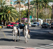 Mounted police — Stock Photo