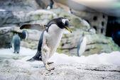 Pingwiny — Zdjęcie stockowe