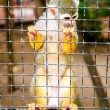 Squirrel Monkey in a cage — Stockfoto #72047503