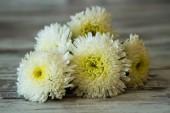 White Chrysanthems  — Stock Photo