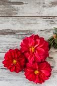 Red Star Flower — Stock Photo