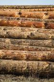 Chopped Firewood Logs — Stock Photo