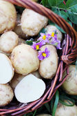 Tubers potatoes on the grass — Stock Photo