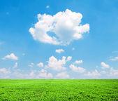 Красивые зеленые поля и голубое небо - видом на природный ландшафт — Стоковое фото