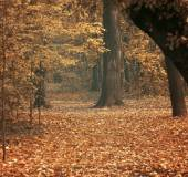 Autumn at forest — Stock Photo