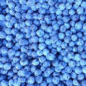 Freshly picked blueberries — Stock Photo