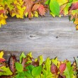 Perfect Autumn background made of multicolored autumnal leaves m — Stock Photo #57906959