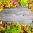 Perfect Autumn background made of multicolored autumnal leaves m — Stock Photo #57908943