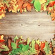 Perfect Autumn background made of multicolored autumnal leaves m — Stock Photo #57921031