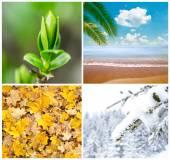 Four season conceptual collage — Stock Photo