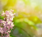 Beautiful Lilac flowers background with bokeh — Stock Photo