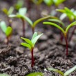 Ecology concept - Rising sprout on dry ground — Stock Photo #72881371