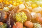 Autumn colorful pumpkins background — Stock Photo