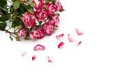 κόκκινο-λευκό τριαντάφυλλα και πέταλα λουλουδιών διάσπαρτα σε ένα λευκό αμουδερές — Φωτογραφία Αρχείου