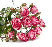 Bouquet of red-white roses, isolated on white — Stock Photo