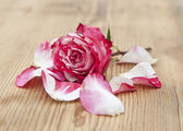 Beautiful rose flowers with petal on rustic table — Stock Photo