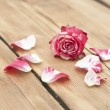 Beautiful rose flowers with petal on rustic table — Stock Photo #53600671