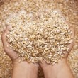 Child's hands holding milled grain — Stock Photo #53602935