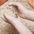 Child's hands holding milled grain — Stock Photo #53603333