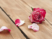 Beautiful rose flowers with petal on rustic table — Stok fotoğraf