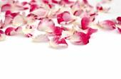 Petals of roses on a white background  — Stock Photo