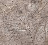 Old timber and trunk texture strip — Stock Photo