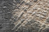 Shabby cut tree trunk scored surface texture background  — ストック写真