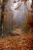 Leaves covered path in forest — Stock Photo