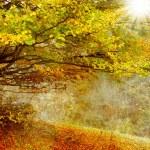Autumn forest — Stock Photo #54444747