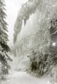 Jul bakgrund med snötäckta granar — Stockfoto