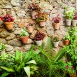 Stone house wall with flowers — Stock Photo #65622405