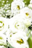 Beyaz gül buketi — Stok fotoğraf