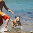 Dog playing in the water with its master — Stock Photo #66229085