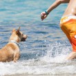 Dog playing in the water with its master — Stock Photo #66229145