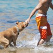 Dog playing in the water with its master — Stock Photo #66229277