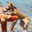 Dog playing in the water with its master — Stock Photo #66229305