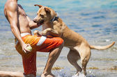 Dog playing in the water with its master — Stock Photo