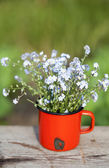 Forget me not flowers in a jar — Stock Photo