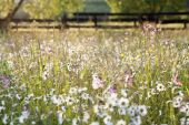 Summer meadow with daisies after rain — Stock Photo