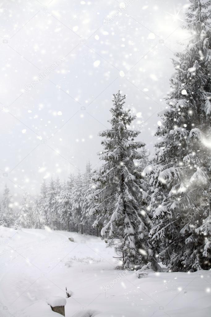 Paesaggio invernale con abeti innevati foto stock for Piani di coperta compositi